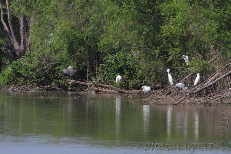 Ten Mile Pond CA
