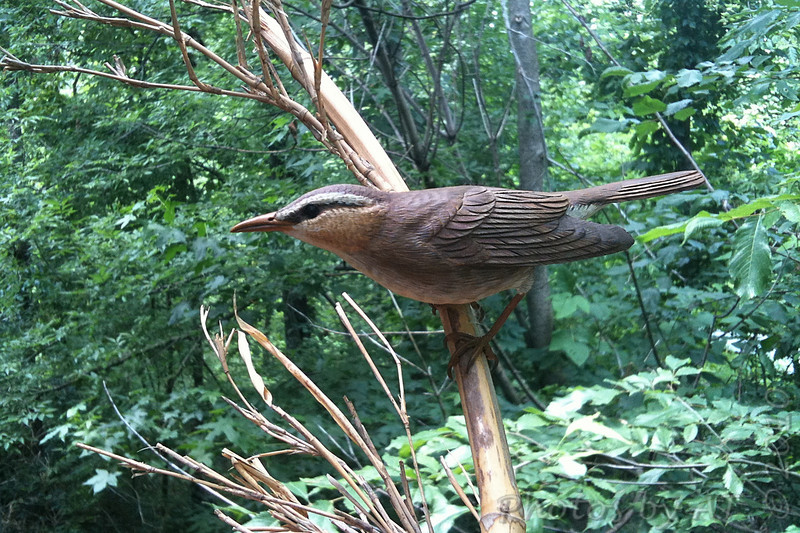Swainson's Warbler <br /> Wood carving at visitors center <br /> Big Oak Tree State Park