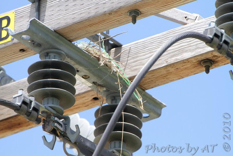 Western Kingbird nest <br /> Fee Fee Road just South of McDonnell Blvd. <br /> Hazelwood, Missouri