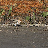 Snow Bunting <br /> Flooded area extending outside the <br /> entrance of Confluence Point State Park