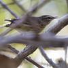 Palm Warbler <br /> Confluence State Park <br /> 10/09/10
