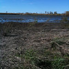 American Avocets <br /> Heron Pond <br /> Riverlands Migratory Bird Sanctuary<br /> <br /> Taken with SmugShot on my iPhone