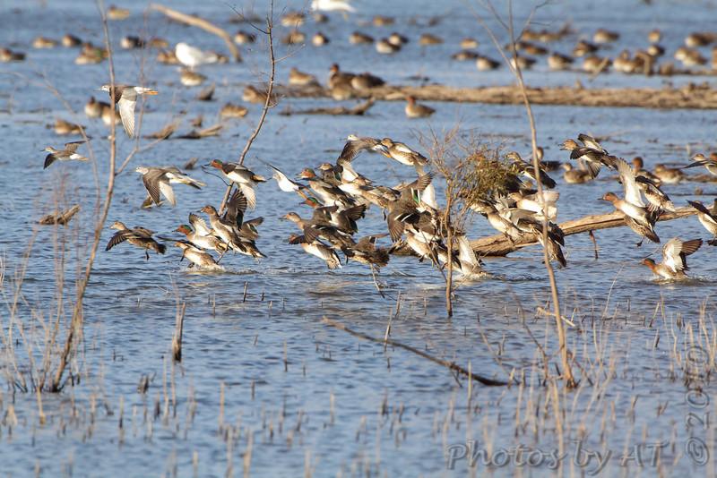Heron Pond rear parking lot <br /> Riverlands Migratory Bird Sanctuary