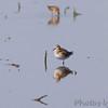 Confluence Road <br /> Riverlands Migratory Bird Sanctuary