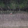 Roseate Spoonbill <br /> Mingo National Wildlife Refuge <br /> Luken Farm Track