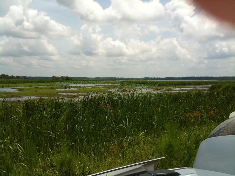 Pearl River State Wildlife Management Area <br /> Ross R. Barnett Reservoir <br /> Mississippi <br /> <br /> Taken with SmugShot on my iPhone