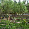 Bridgeton Riverwoods Park and Trail