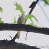 Unknown<br /> Bridgeton, Mo. <br /> 5/08/2011