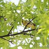 Bridgeton, Mo. <br /> 5/08/2011