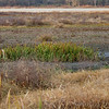 Not much wet areas left <br /> This next to where the Yellow Rail was seen <br /> Voelkerding Slough