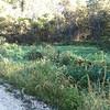 Mourning Warbler habitat <br /> <br /> Taken with SmugShot on my iPhone
