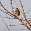 Pickering Creek Audubon Center <br /> Talbot County, Maryland <br /> 2/17/12