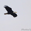 Bald Eagle <br /> Rest stop on I70 just west of hwy 84