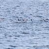 Riverlands Migratory Bird Sanctuary