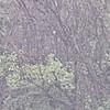 Black-billed Cuckoo at 925 yards <br /> (crop of next photo)<br /> Behind Orton Road parking lot <br /> Heron Pond <br /> View/photo from Riverlands Way parking lot <br /> Riverlands Migratory Bird Sanctuary