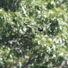 Pileated Woodpecker <br /> Saline Valley Conservation Area