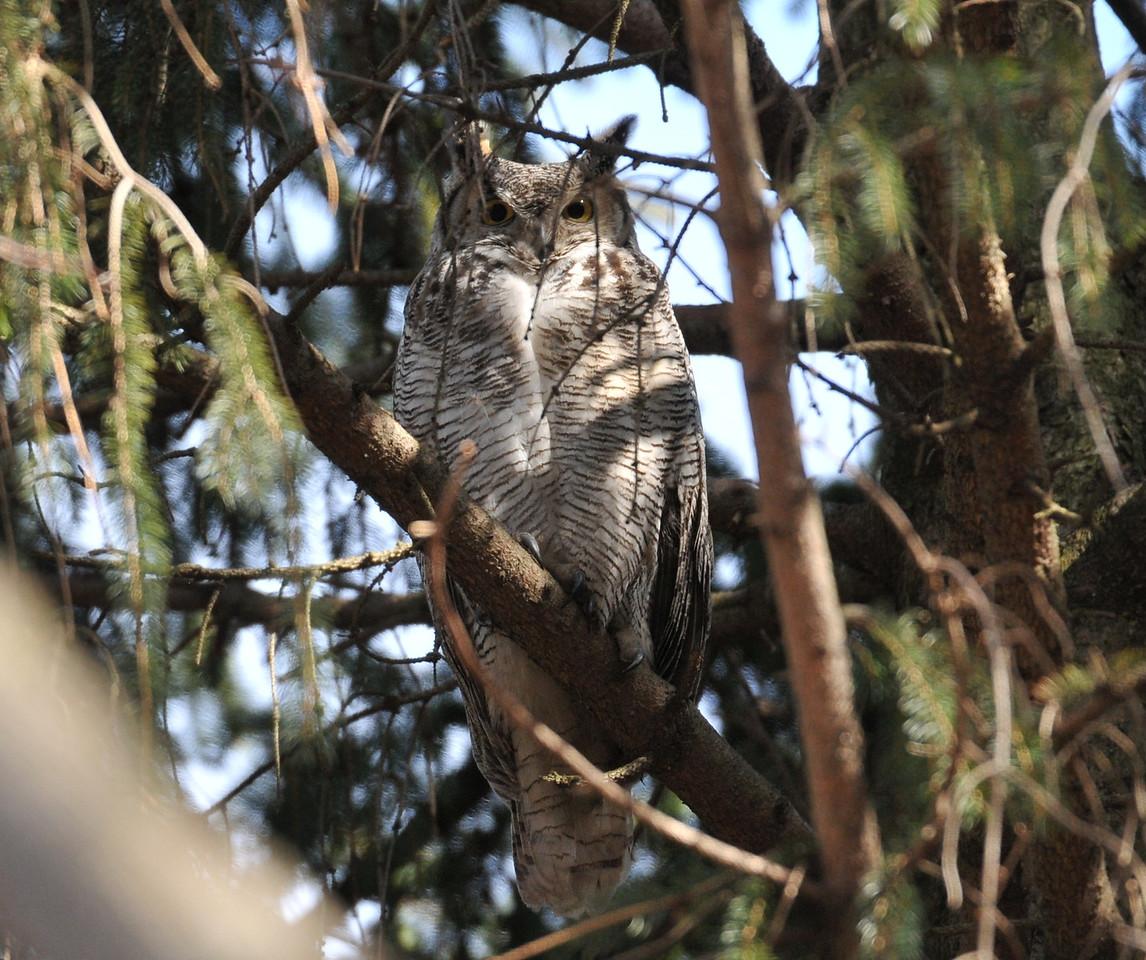 February 9, South Arboretum, U of I Campus