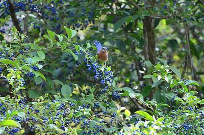 2013-10-02 Birds Dawes