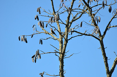 Birds 2013-10-09 Dawes