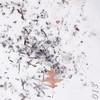 Sharp-shinned Hawk feeding left-overs <br /> City of Bridgeton  <br /> St. Louis County, Missouri <br /> 2013-12-09