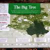The Big Tree <br /> Lamar Peninsula <br /> Rockport, Texas