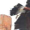 Harris's Hawk <br /> Along Military Hwy <br /> Texas