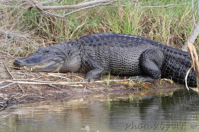 Estero Llona Grande State Park <br /> Texas