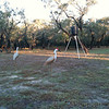 Lorries deer feeder with two Sandhill Crane decoys <br /> Lamar peninsula <br /> Rockport, Texas <br /> <br /> Taken with SmugShot on my iPhone