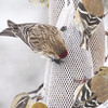 Common Redpoll <br /> Bridgeton, Mo. <br /> 03/01/2013