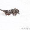 Song Sparrow <br /> Bridgeton, Mo. <br /> 03/24/2013  <br /> 3:52pm