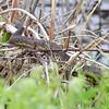 Squaw Creek Natural Wildlife Refuge