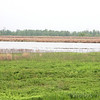 Heron Pond <br /> Riverlands Migratory Bird Sanctuary