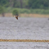 Whimbrel <br /> Hwy N to Winfield Dam <br /> 5/20/13