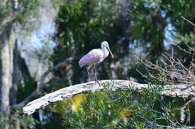 2014-02-11 Birds Orlando Wetlands