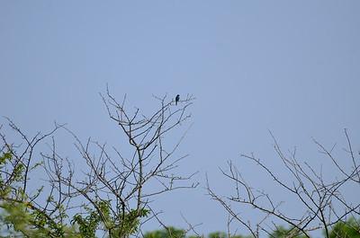 2014-06-26 Birds Dawes