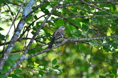 2014-07-14 Birds Nahantan Park Newton