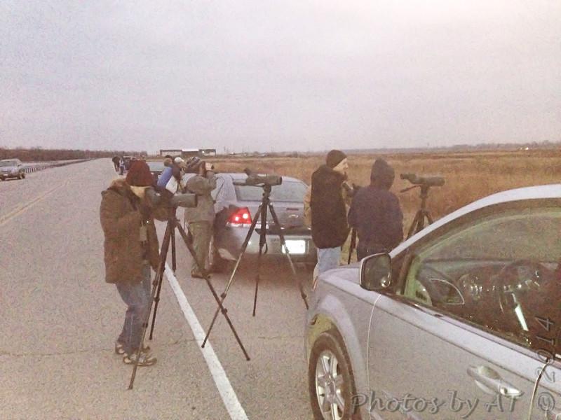 Short-eared Owl watch  <br /> Riverlands Way <br /> Riverlands Migratory Bird Sanctuary <br /> 12/13/14