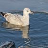 Ellis Bay <br /> Riverlands Migratory Bird Sanctuary