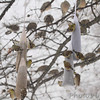 American Goldfinches <br /> City of Bridgeton <br /> St. Louis County, Missouri<br /> 2014-01-05