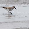 Ellis Bay<br /> Riverlands Migratory Bird Sanctuary