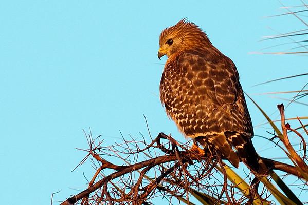 20141211 Central Florida Birds