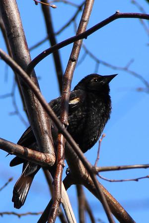 2014/15 Birds