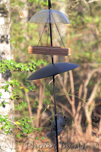 Squirrel trying to get to feeder  Wildewood, California   St. Mary's County, Maryland  04/16/15