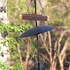 Squirrel trying to get to feeder <br /> Wildewood, California  <br /> St. Mary's County, Maryland <br /> 04/16/15