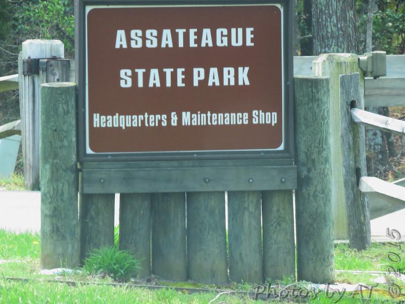 Assateague State Park  <br /> Assateague Island, Maryland <br /> 04/21/15