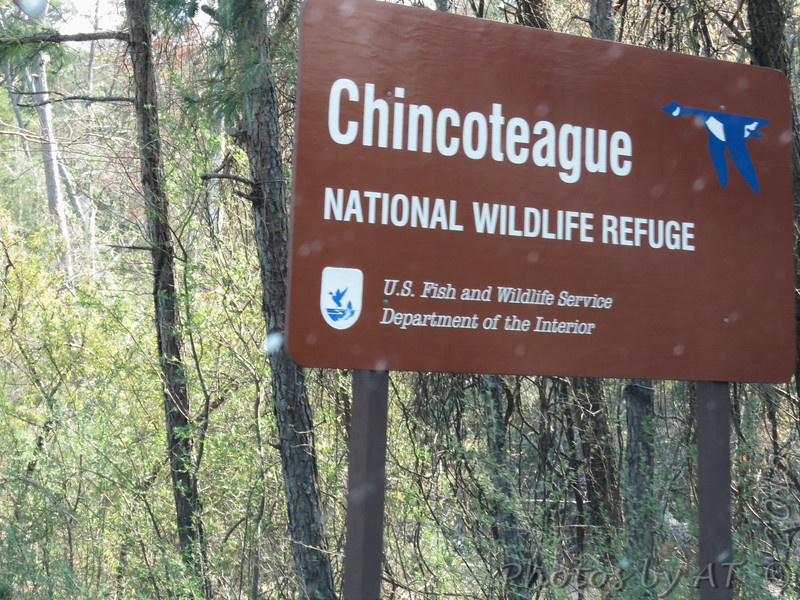 Chincoteague National Wildlife Refuge <br /> Assateague Island, Virginia <br /> 04/21/15