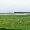Riverlands Migratory Bird Sanctuary <br /> 7/07/15