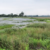 Riverlands Migratory Bird Sanctuary  <br /> View from Heron Pond Parking Lot <br /> 7/07/15
