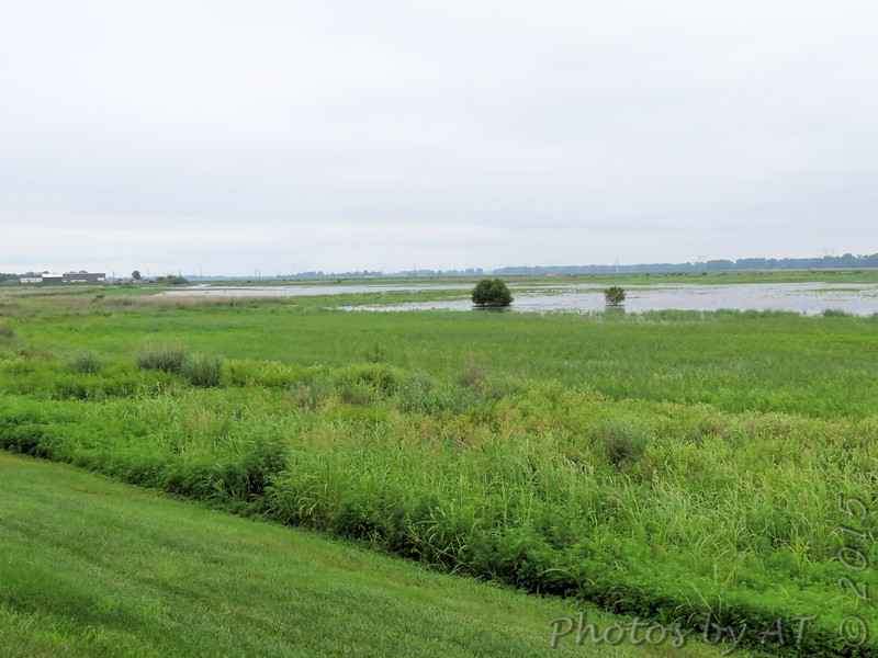 Riverlands Migratory Bird Sanctuary <br /> 7/07/15