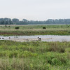 Riverlands Migratory Bird Sanctuary <br /> East Heron Pond Trail going over output <br /> channel down stream from Heron Pond <br /> 7/07/15